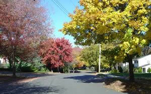 Fall Trees on Residential Street